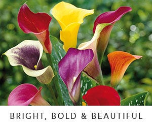 Bright Bold & Beautiful